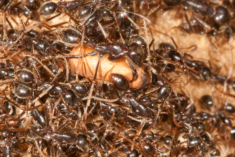 Image Result For All About Ants